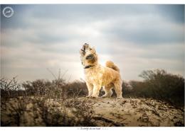 Renzo, Mogi Hondenfotografie