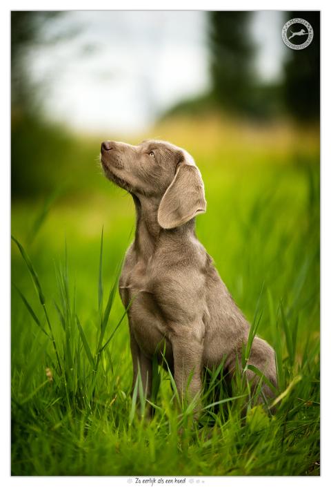 Sara, Slowaakse Ruwharige Staande Hond