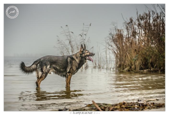 Nero, Duitse Herder