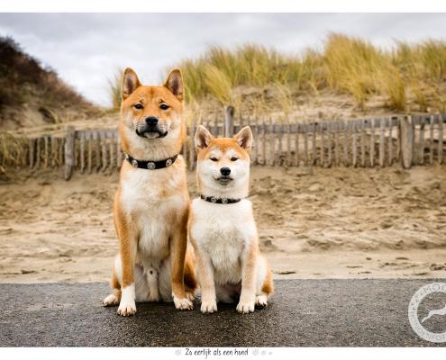 Fotoshoot voor halsbanden: Max en Sam Designer Dog