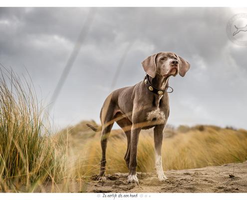 Fotoshoot voor halsbanden Designer Dog: Nica
