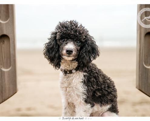 Fotoshoot voor halsbanden Designer Dog: Kubby