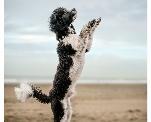 Fotoshoot voor halsbanden Designer Dog: Kubbyotoshoot voor halsbanden Designer Dog