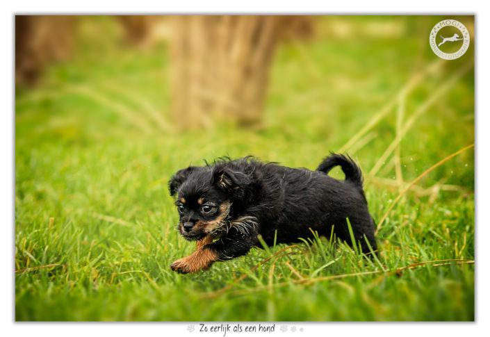 Puppies door Mogi Hondenfotografie